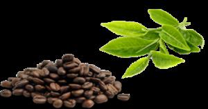 cafëine-en-l-theanine